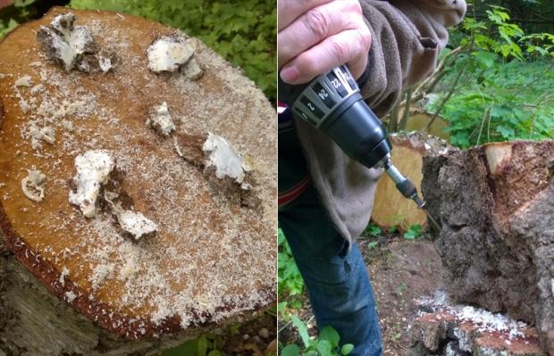 myceliumhuller